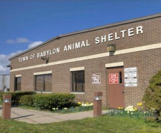 Town of Babylon Animal Shelter