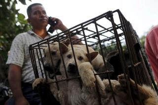 Dogs transported in a cage to the dog meat market