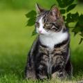 Roslyn Estates Considers Ban On Feeding Feral Cats