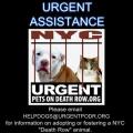nycdogs.urgentpodr.org
