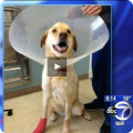 When Teddy was found, he had an injured foot and later needed to have his toe amputated.
