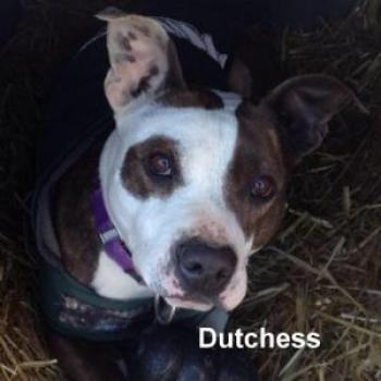 Dutchess